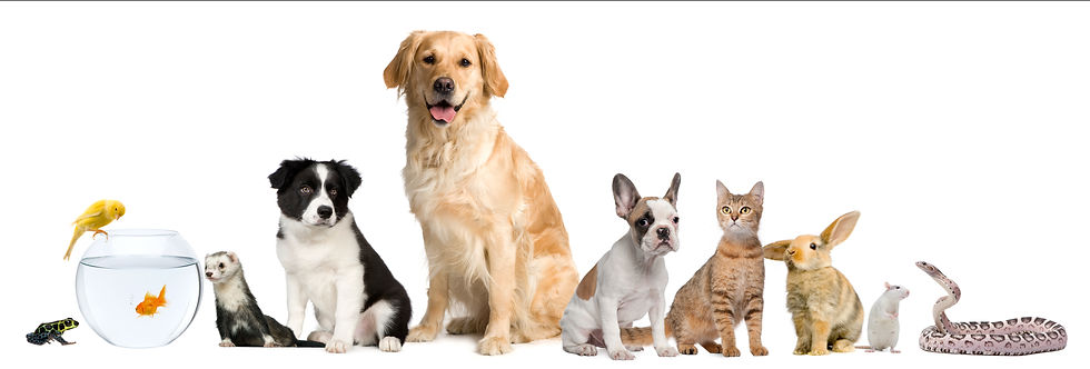 group-of-pets-sitting-in-front-of-white-