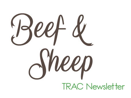 TRAC Beef & Sheep Newsletter - Autumn 2021 Edition