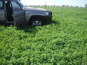 Car parked in a feed crop