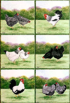 Single tile chickens