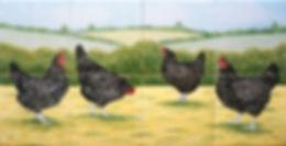 Hand painted Maran hens on tiles