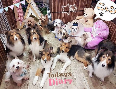 many dogs in shop.jpg