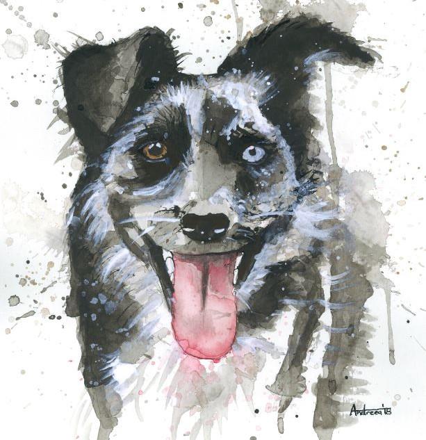 austraian shepherd watercolor pet portra