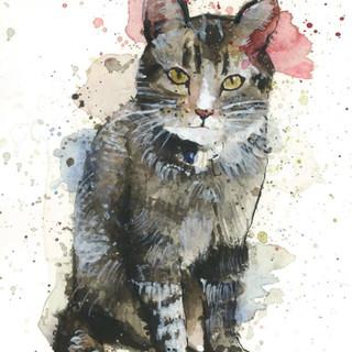 cat pet portrait.JPG