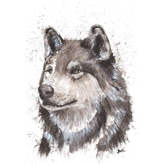 watercolor grey wolf art.jpg