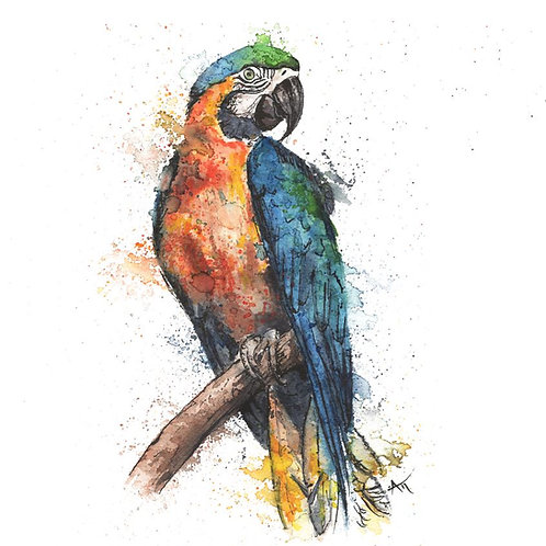 Macaw Parrot - Original Painting