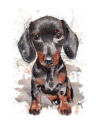 mini dachshung pet portrait.jpg