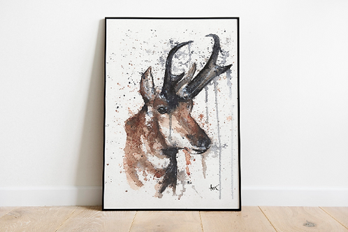 Red deer - Art print