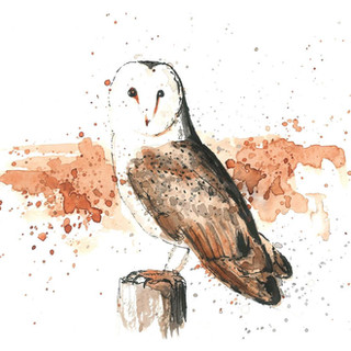 watercolor barn owl painting.JPG