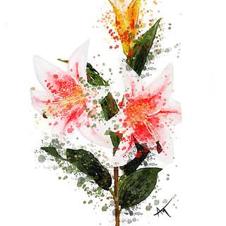 Flower watercolor lilly.jpg