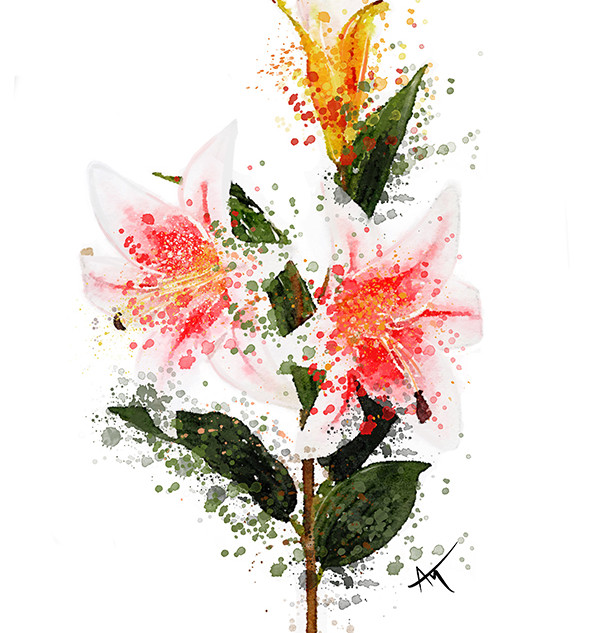 Flower watercolor lilly.jpg
