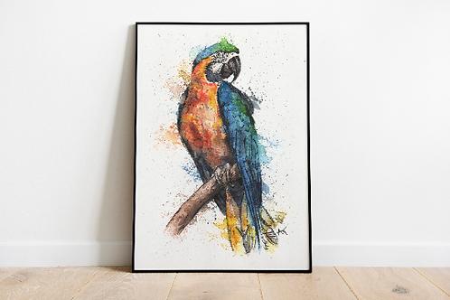 Macaw Parrot - Art Print