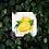 Thumbnail: Lemons - Art Print