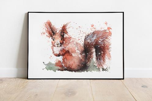 Squirrel - Art print