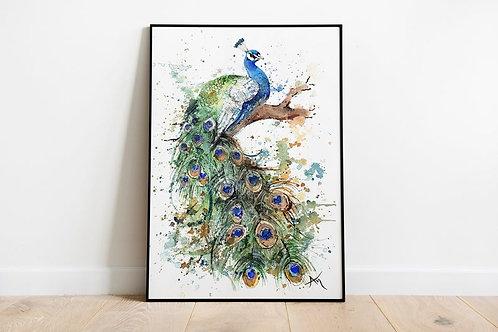 Peacock - Art Print
