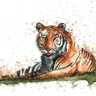 watercolor bengal tiger painting.JPG