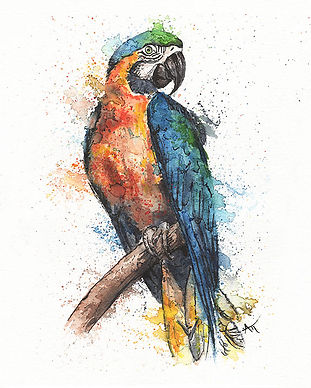 colorful macaw parrot painting watercolo