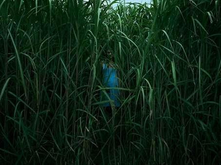 Im hohen Gras