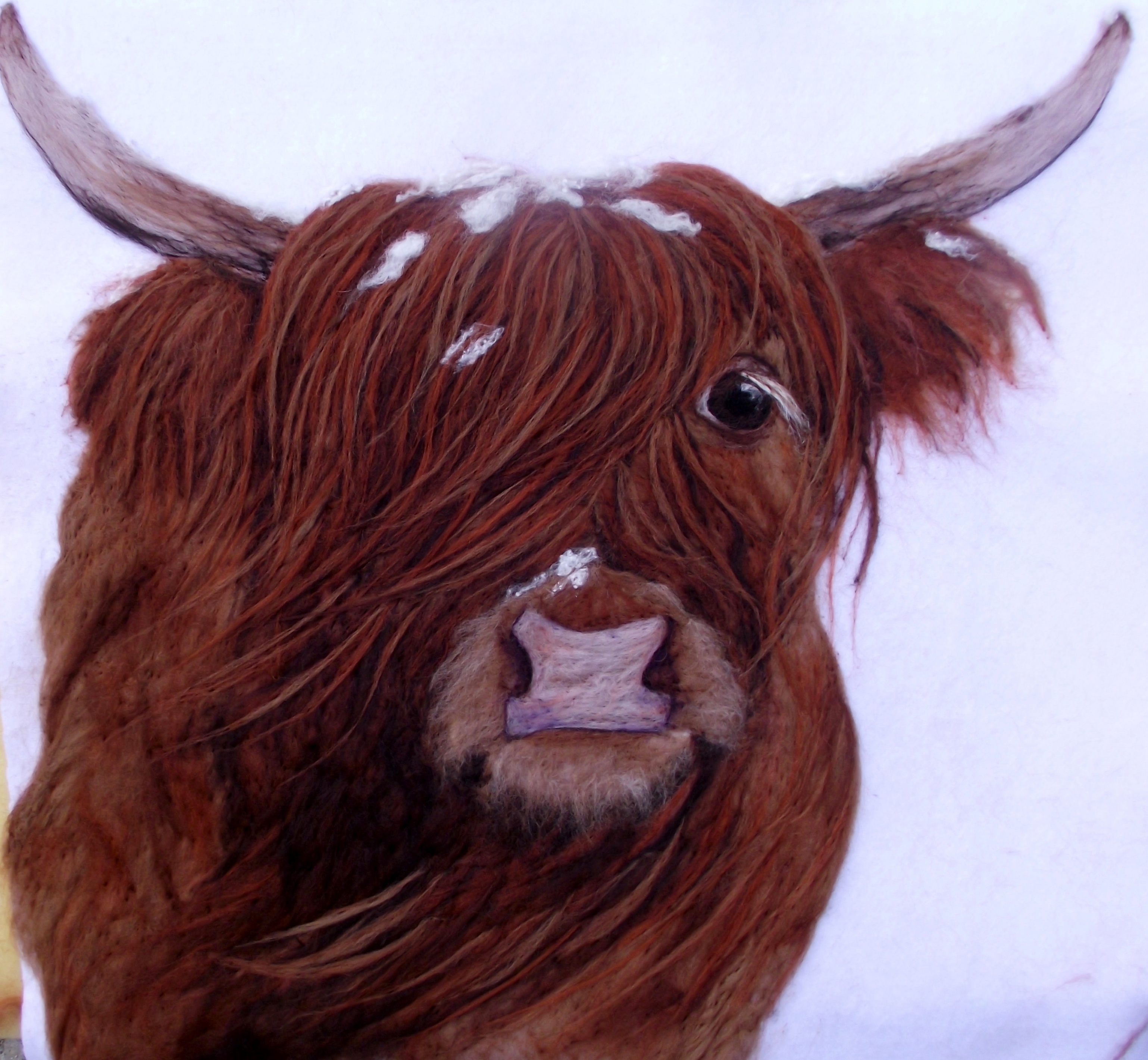 Campbell's Snow coo