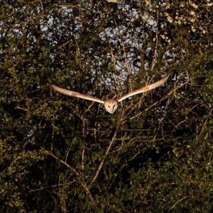 Owl%20(2)_edited.jpg