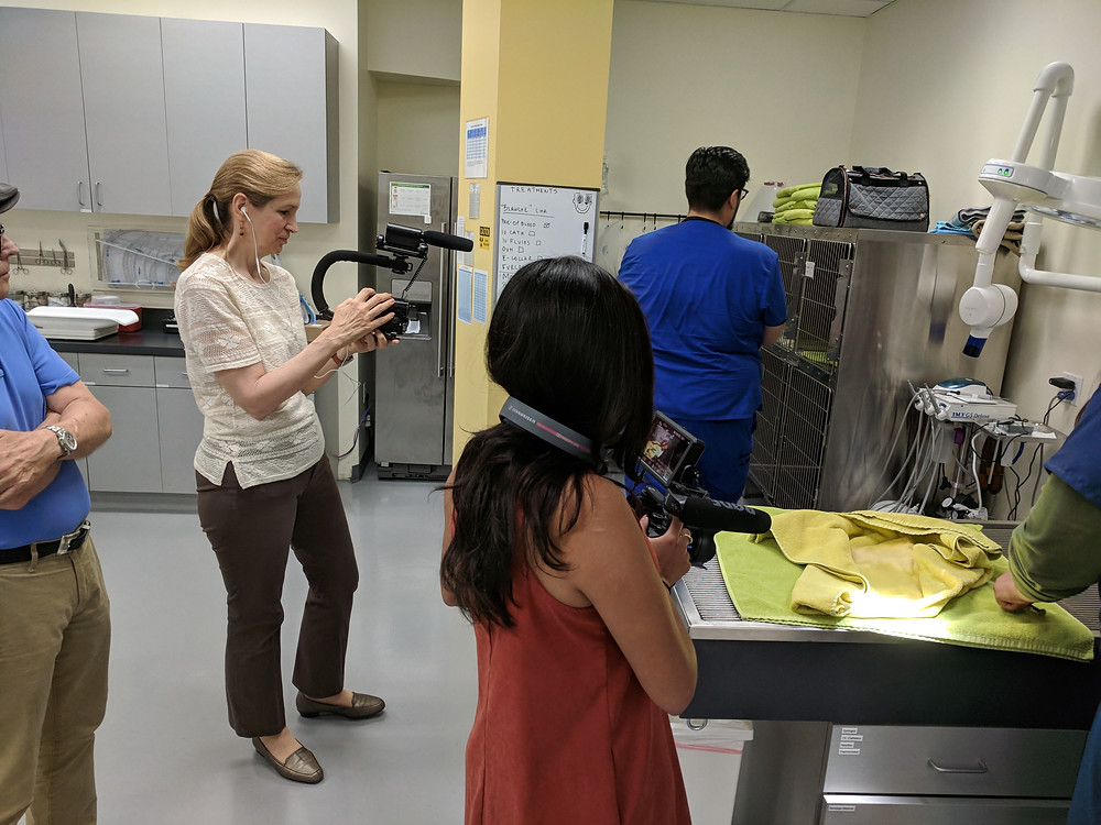 Lucy and classmates shoot video at a DTLA animal hospital.