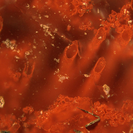 Are Canadian fossils evidence of the oldest form of life yet seen?