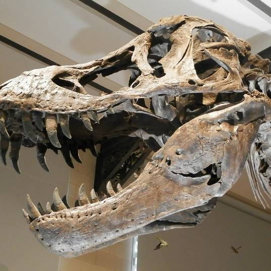 Scientists shakeup in the dinosaur family tree. A British branch?