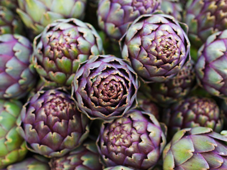 Master class: Growing Globe Artichokes in Tasmania