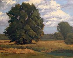 Cpruchnofski-landscape1-FAT