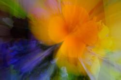 wildflower bouquet (2)
