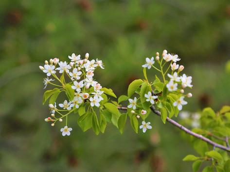 花樹精療癒