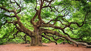 4 of The Most Crucial Lessons Every Entrepreneur Must Learn  From An Oak Tree