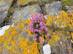 Flowers on Eileen Gamhna