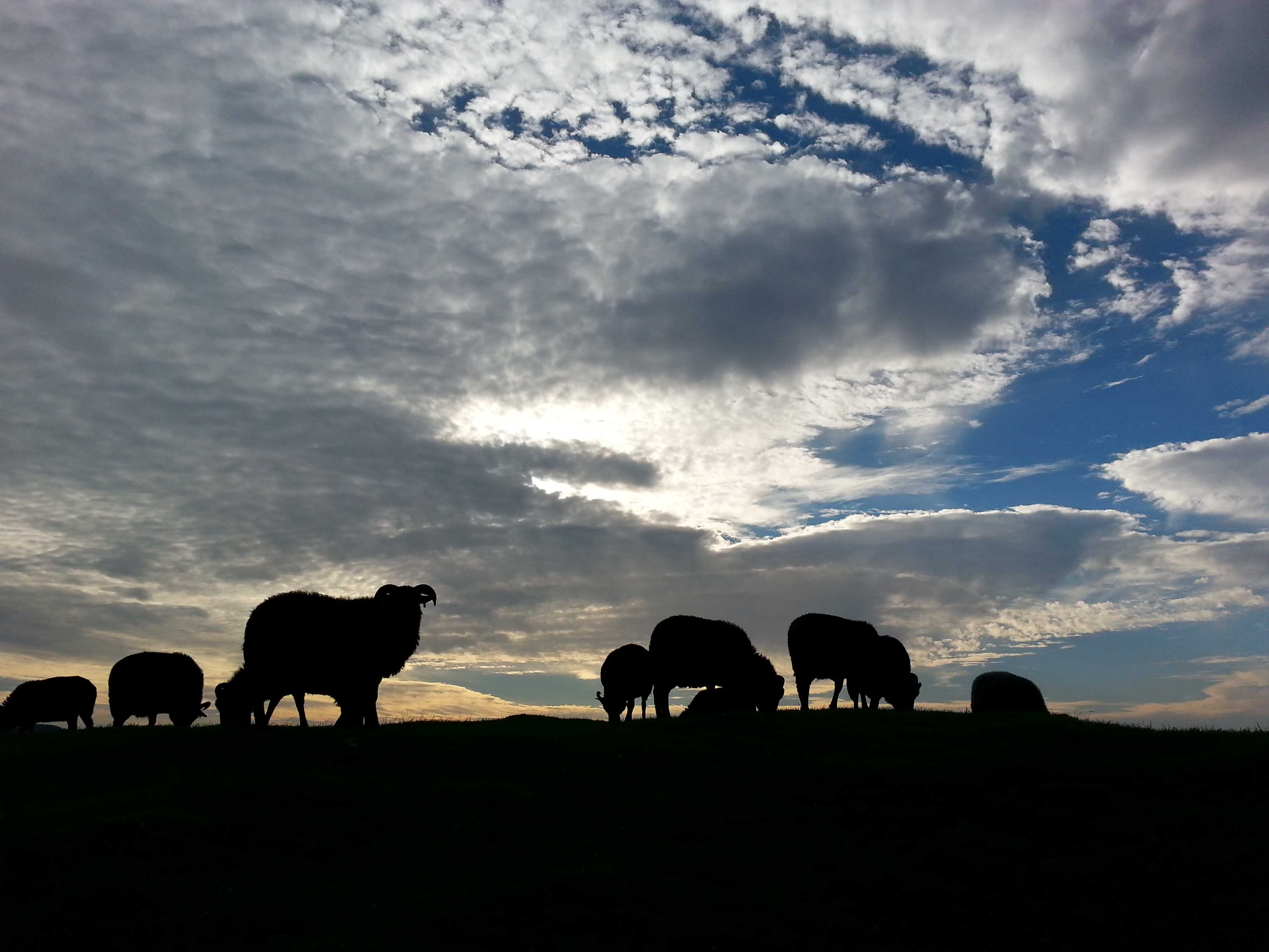 Sheep on Dunadd