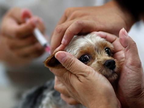Divulgado calendário de vacinação antirrábica em Mariana