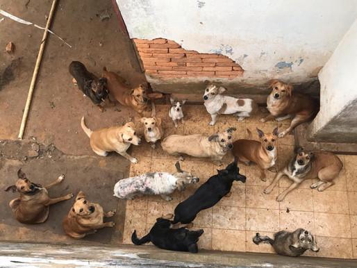 Cerca de 70 cachorros vivem em situação precária, em Ouro Preto, após adoecimento de sua tutora