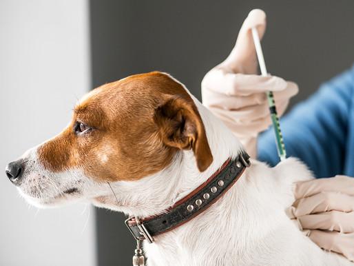 Samarco promove campanha de vacinação canina em Mariana