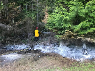 Brush fire stopped from spreading to thick timber