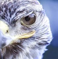 bird-359143_640_edited_edited.jpg