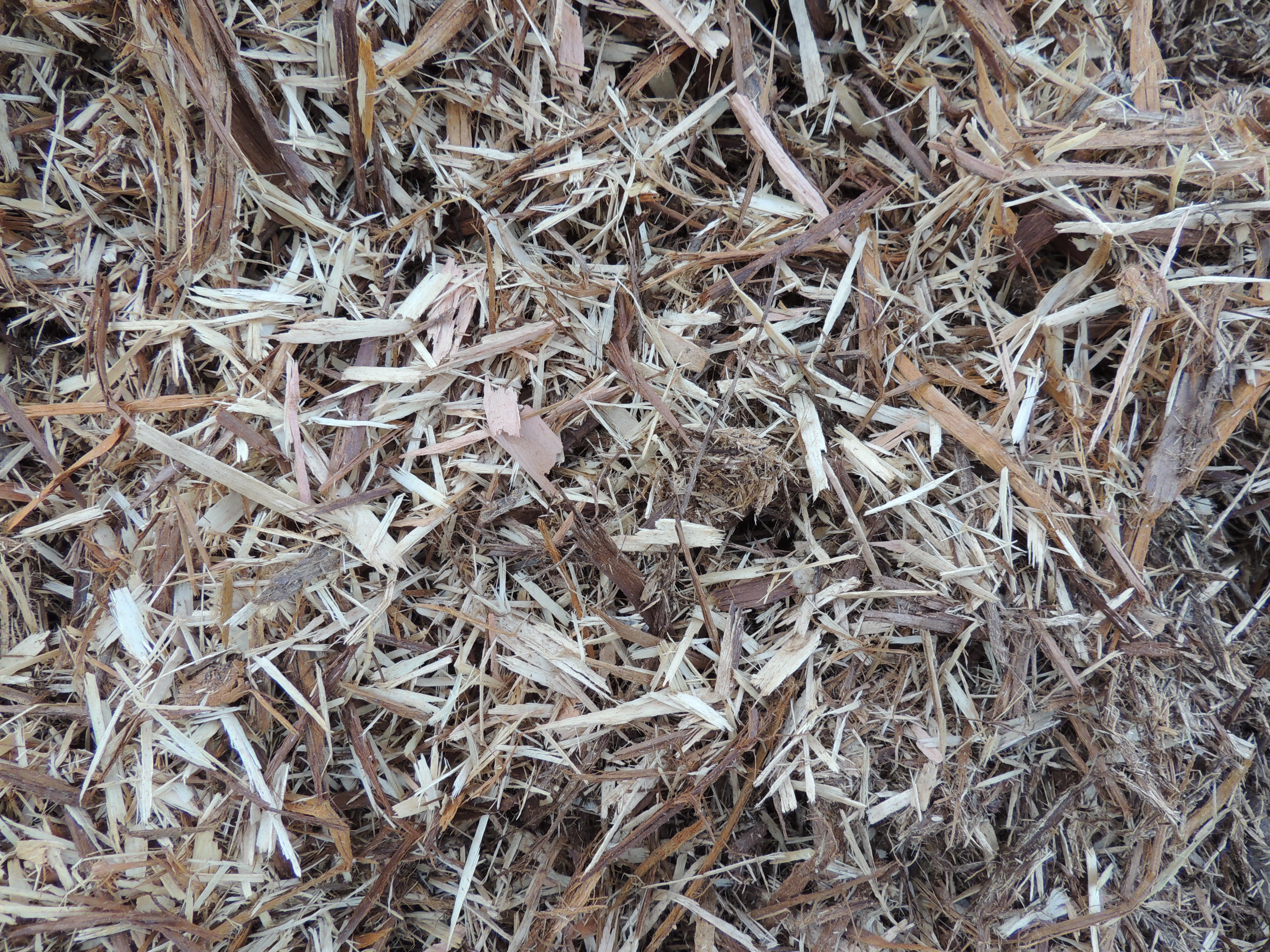 Shredded Cedar Shavings