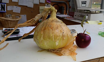 Tom's Massive Onion!