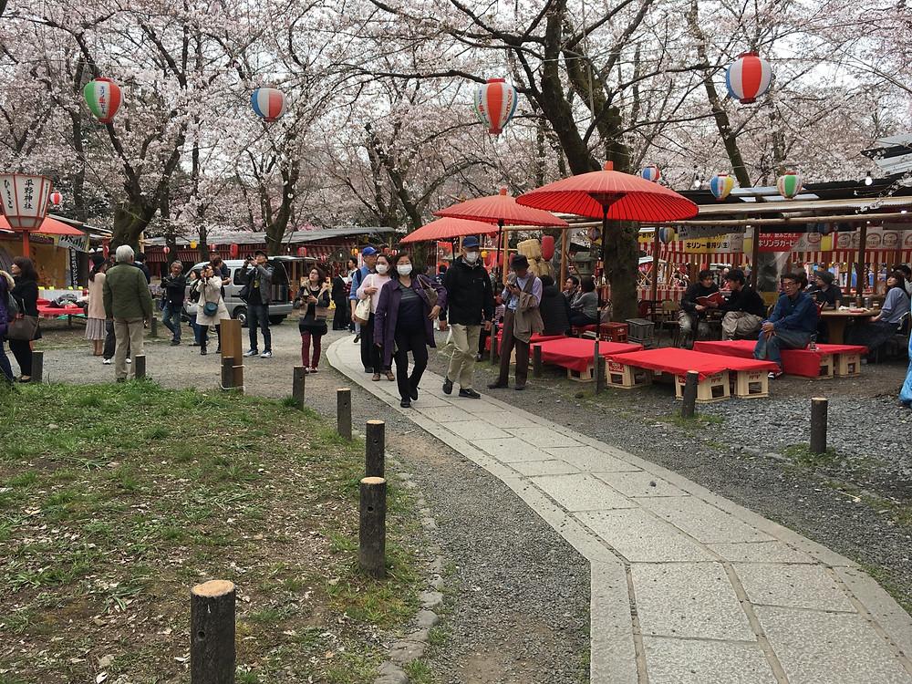 Hanami im Hirano Schrein Kyoto