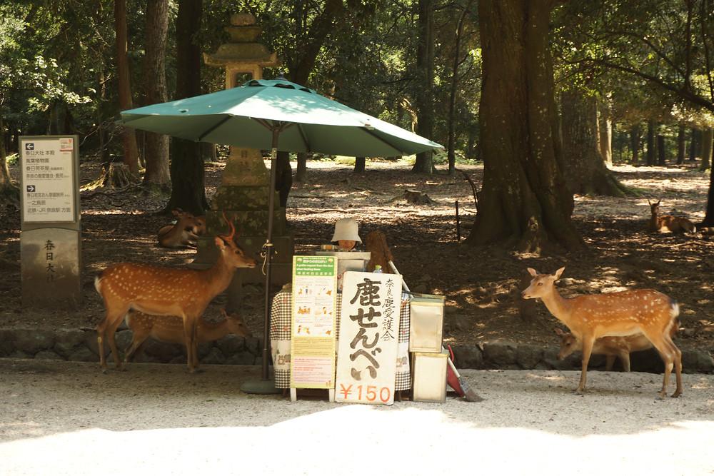 Hirsche im Nara Park