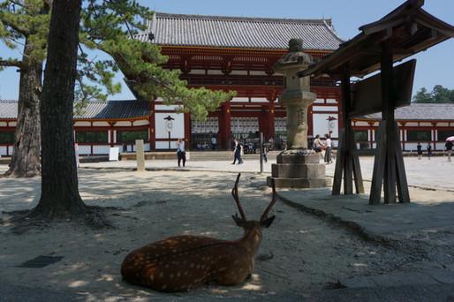 Meet Kyoto and Nara