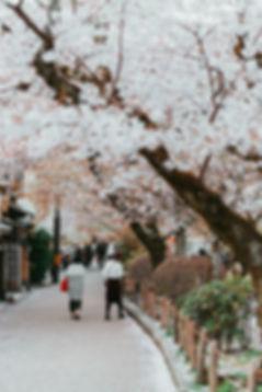 Meet Kyoto Path of Philosophy