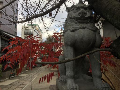 Meet Kyoto Löwen-Hund