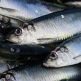 herring_istock.png