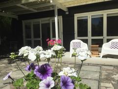Full bloom at Columbus Cottage