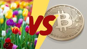 O dilema do Bitcoin e as tulipas