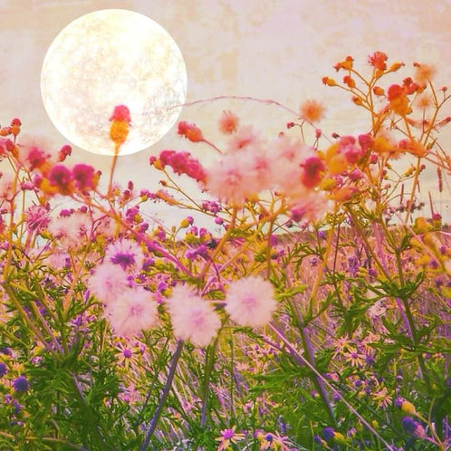 New Moon Service Aug 30, 2019 Customized to Your Petition, Manifestation & Needs